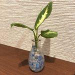 ダイソー「ジュエルポリマー」おしゃれに手軽に観葉植物を育てよう!