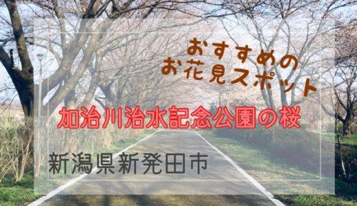 新潟県新発田市【加治川治水記念公園の桜】おすすめの花見スポット!